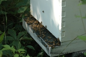 bees on their porch-BLOG