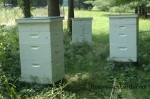 three hives-BLOG
