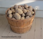 potatoes in basket--BLOG