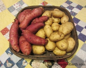 potatoes and sweet potatoes-BLOG