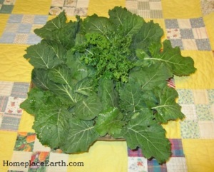 collards-parsley-kale-BLOG