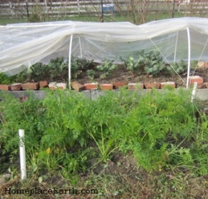 kale-row cover-carrots-BLOG