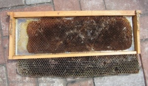 medium frame that the bees have made into a deep