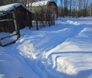 path in the snow to the barn BLOG